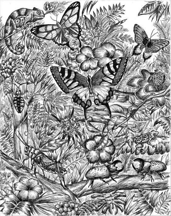 Dušan Krtolica dibujo mariposas