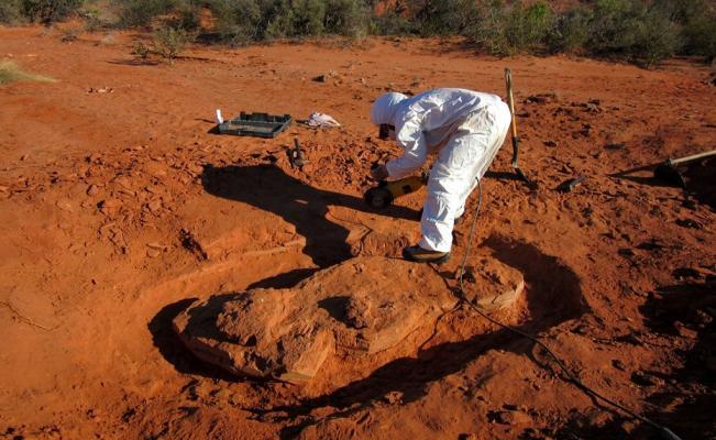 Descubrimiento de fósil de dinosaurio