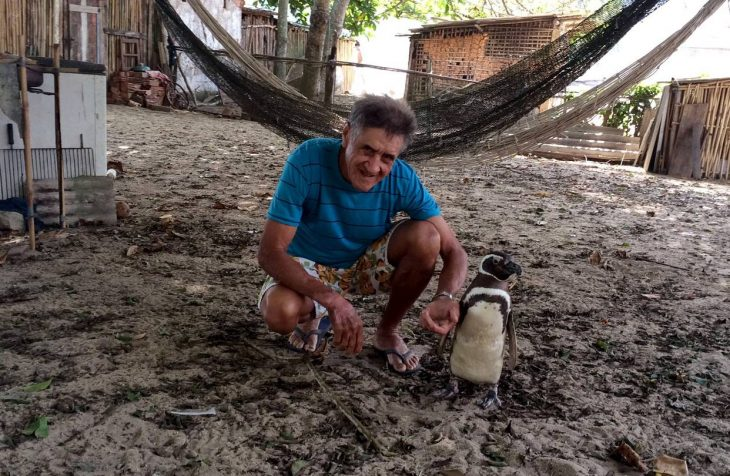 DinDim el pingüino agradecido
