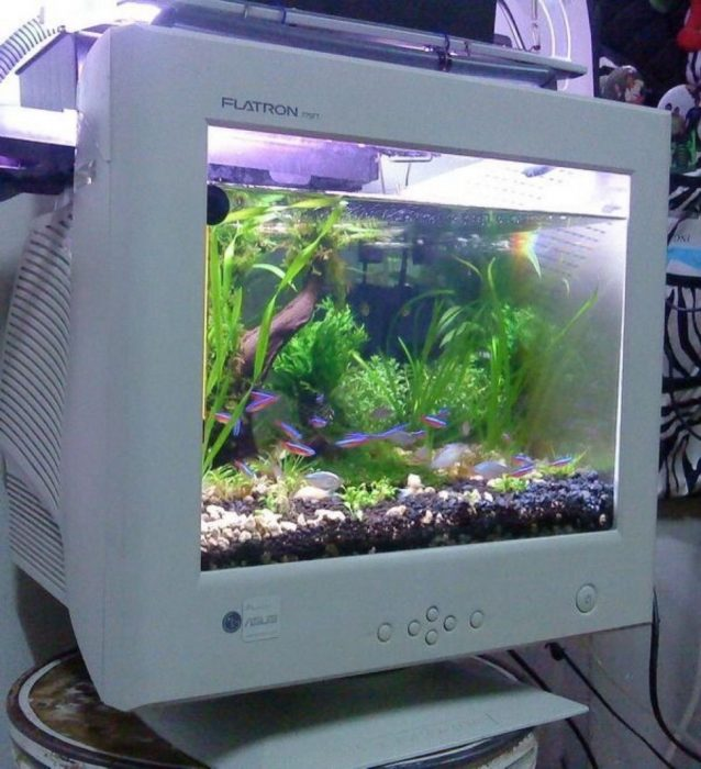 Inventos pecera monitor