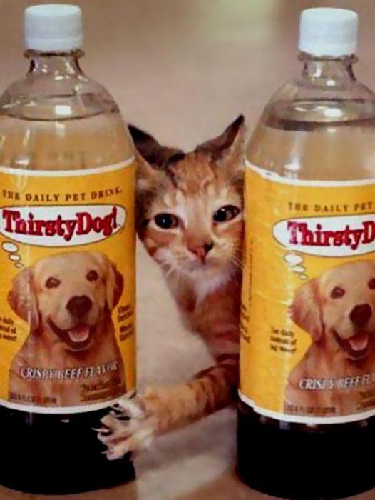 soda de mascotas