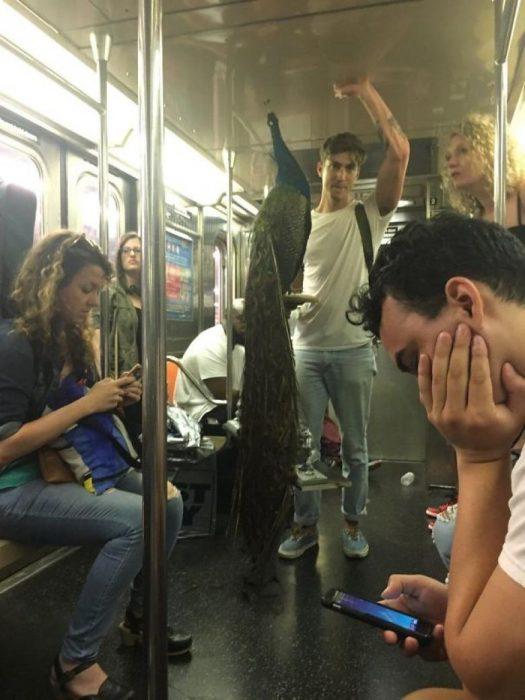 hombre con pavorreal en el metro