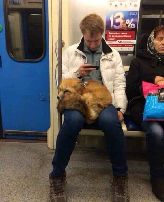 zorro mascota en el metro