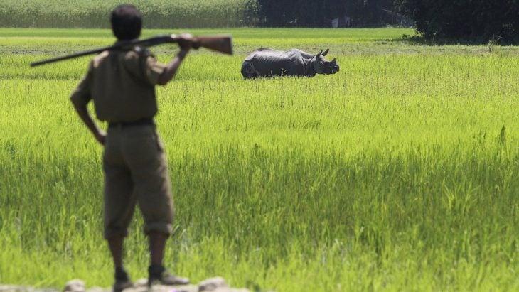 Cazadores de rinocerontes