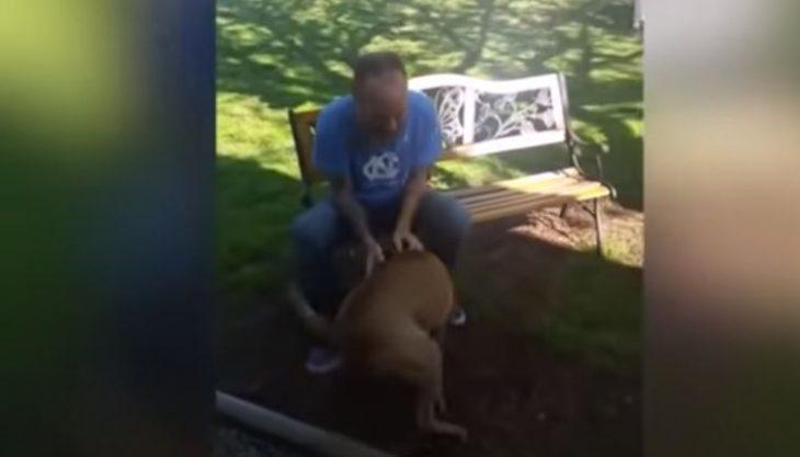 Perro no reconoce a su dueño