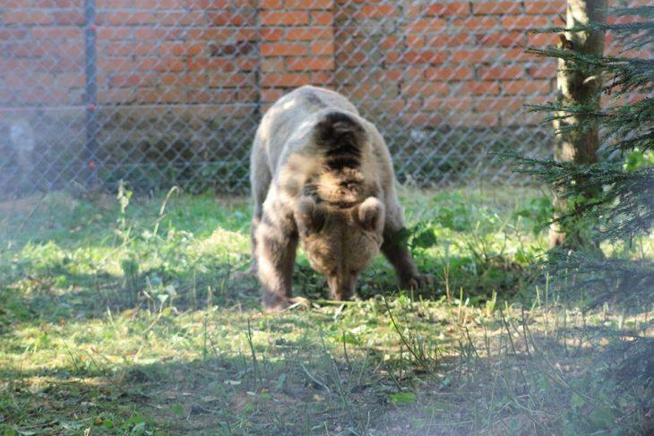 masha oso circo en libertad