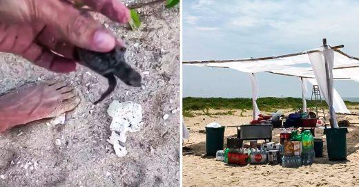 COVER Una fiesta de mirreyes mató en Veracruz a decenas de tortugas