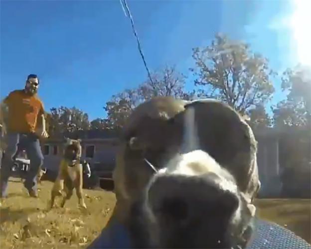 Perro con GoPro