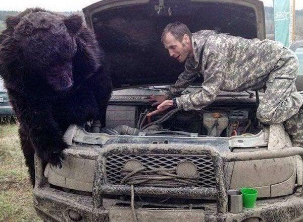 Cosas raras Rusia oso mecanico