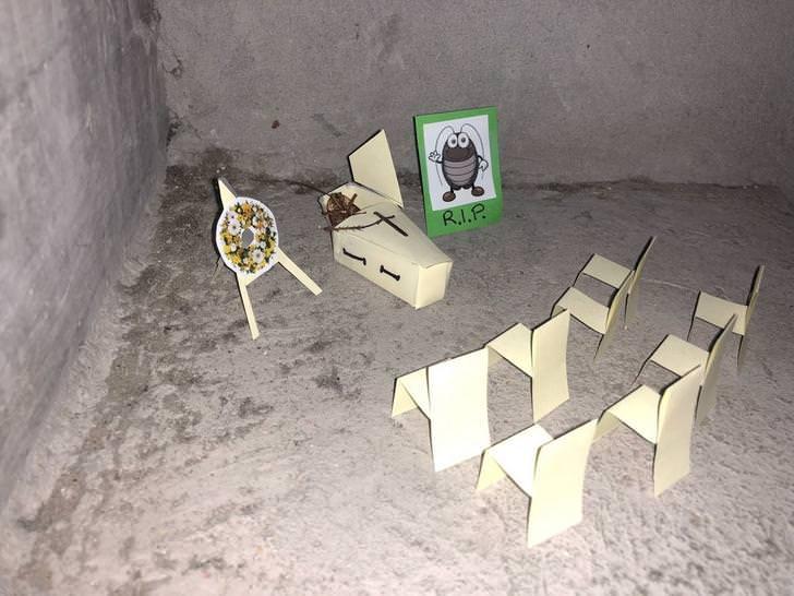 historia de una cucaracha 8