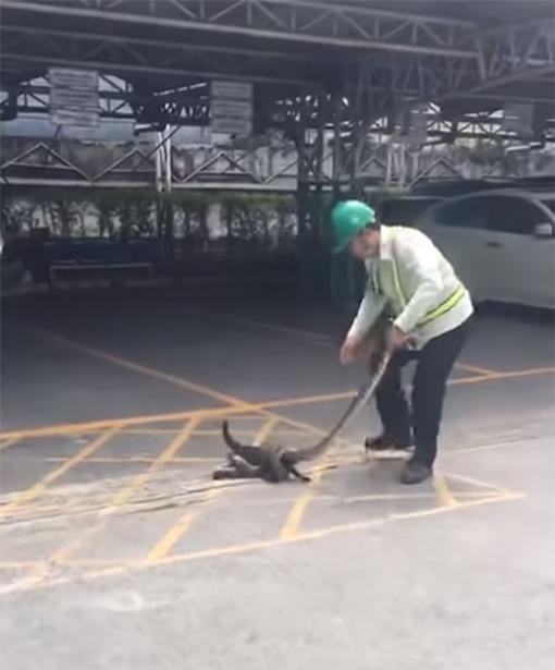 Hombre salva a un gatito
