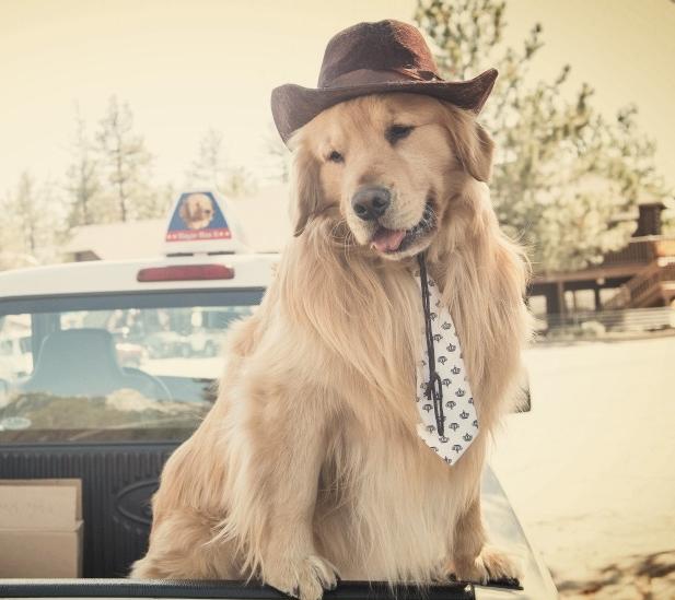 Alcalde perro Max