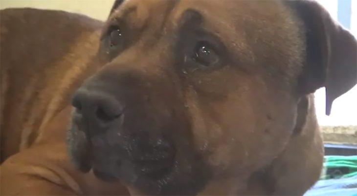 AJ el perro que llora