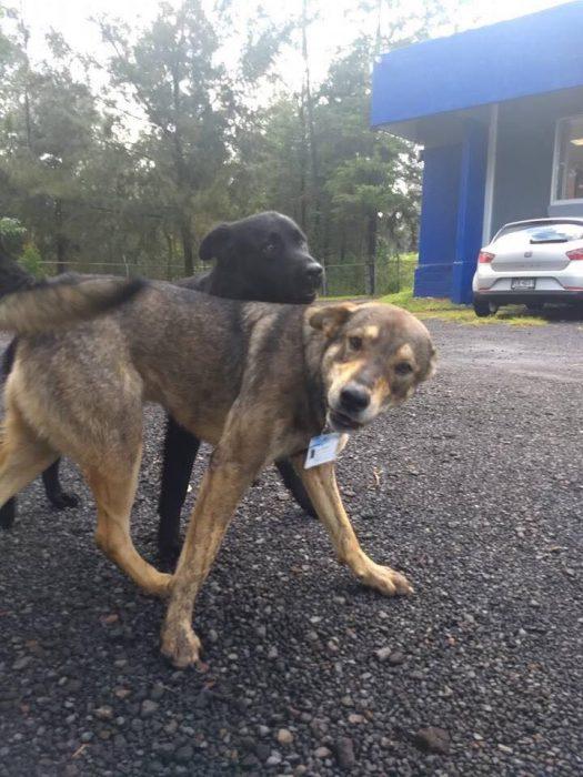 terry y negro perros policías