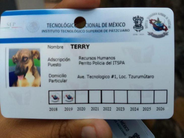 credenciales perros policias