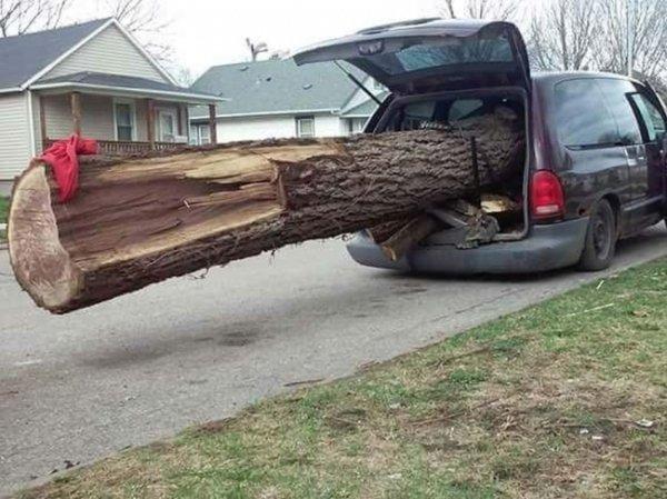 Personas tontas tronco