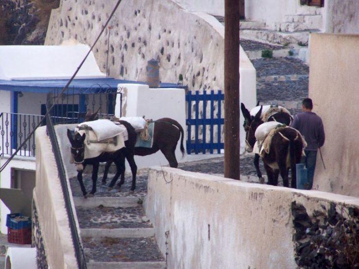 Burros en Santorini