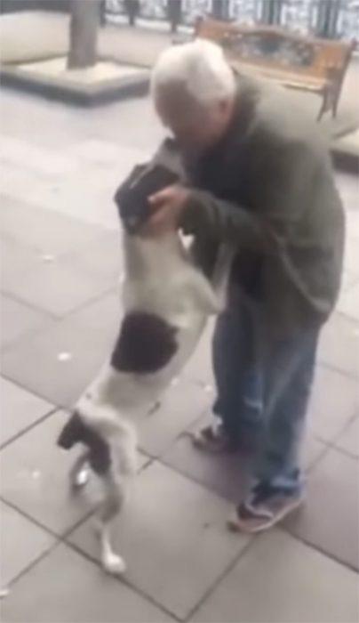 Anciano y su perro