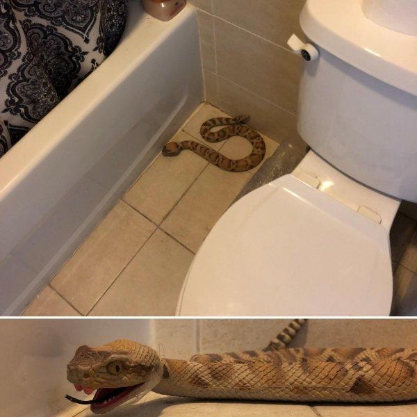 idiotas serpiente