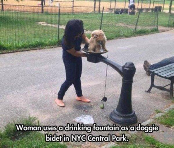 idiotas perro