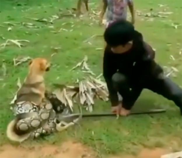 Perro atrapado por serpiente