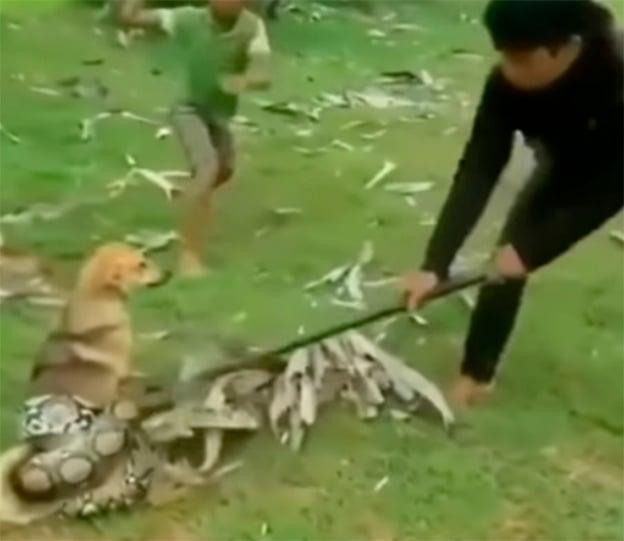 Serpiente atrapa perrito