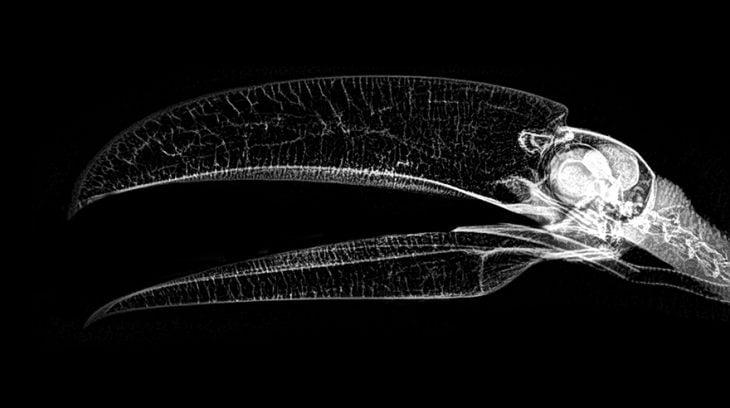 Rayos X de animales