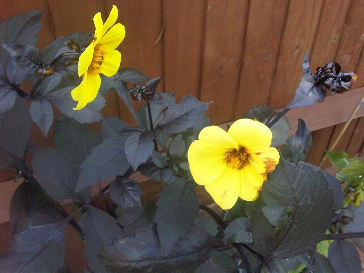 supersticiones flores