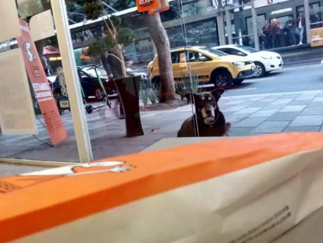 Perro en pizzería
