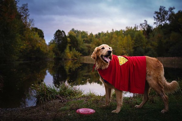 Finn, el perro con cáncer