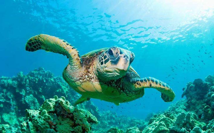 Tortuga en el océano