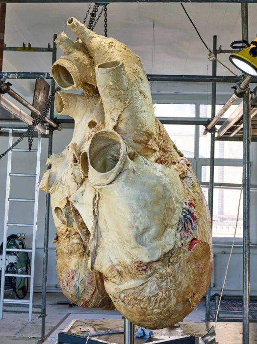 pequeños humanos corazón
