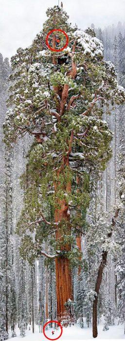 pequeños humanos árbol