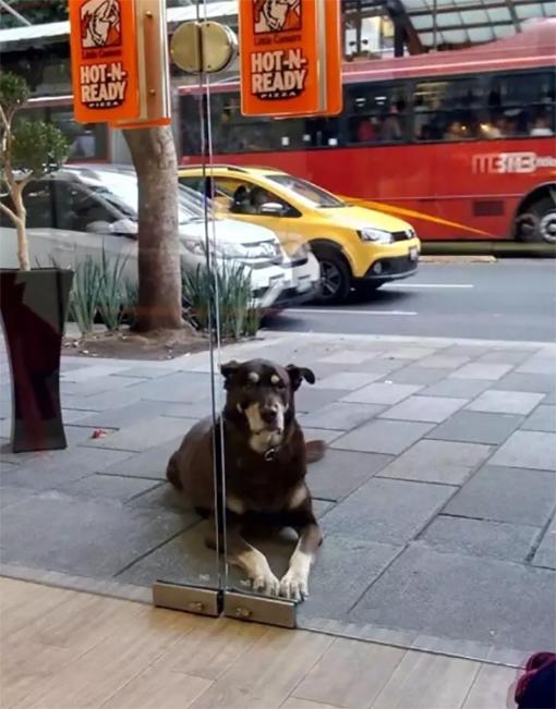 Perro afuera de pizzería