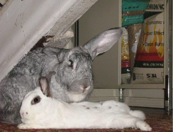 supersticiones conejos