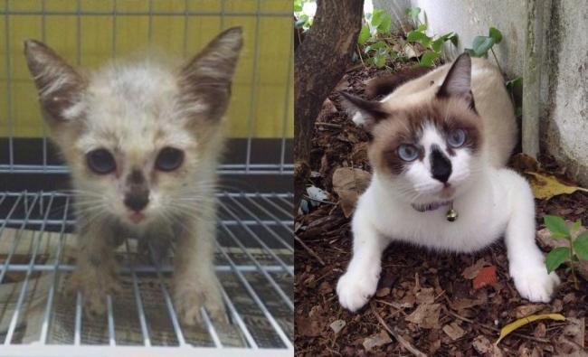 animales antes y despues adoptado