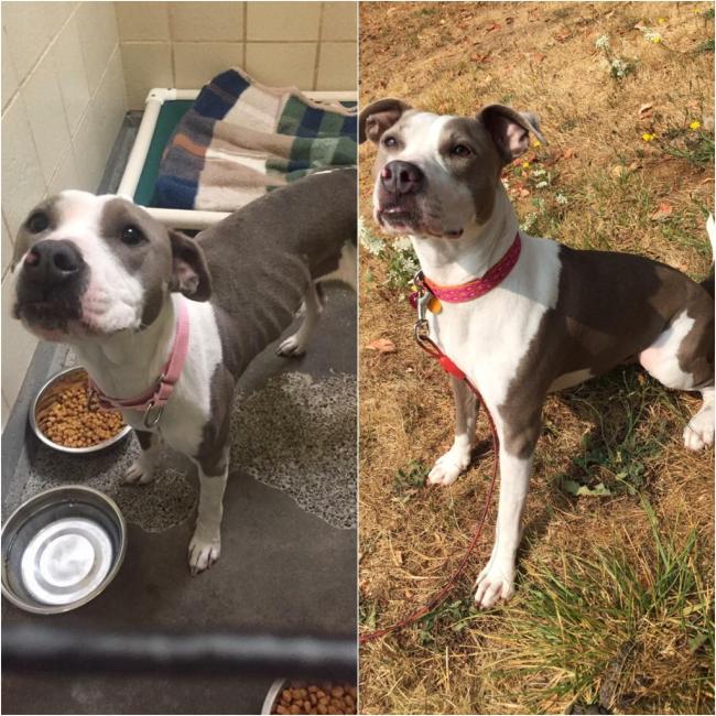 animales antes y después adoptado