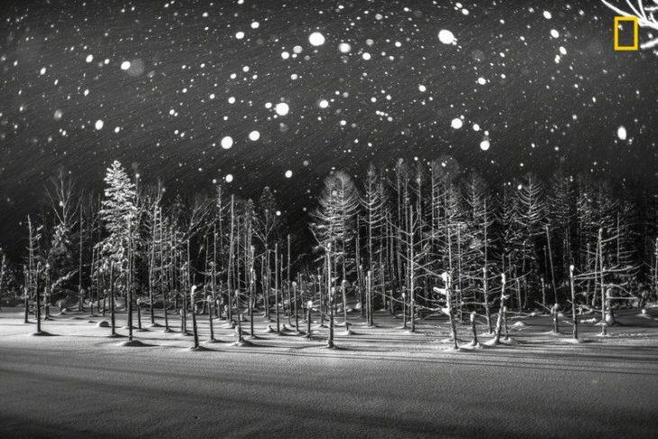 Snowflakesde Rucc Y Ito.