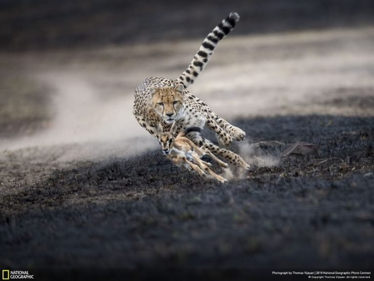 An Astonishing Chase, Thomas Vijayan
