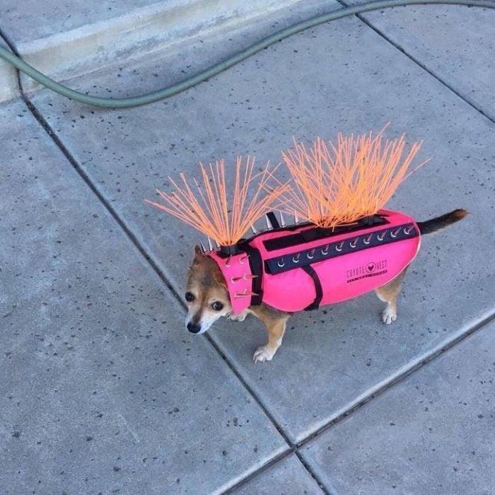 Inventos útiles disfraz perro