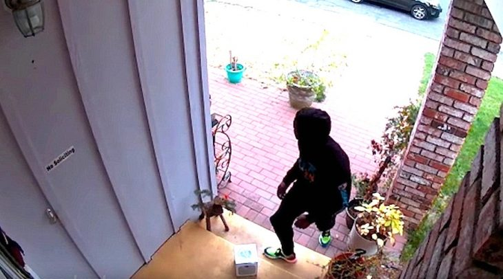 ladrón bomba apestosa