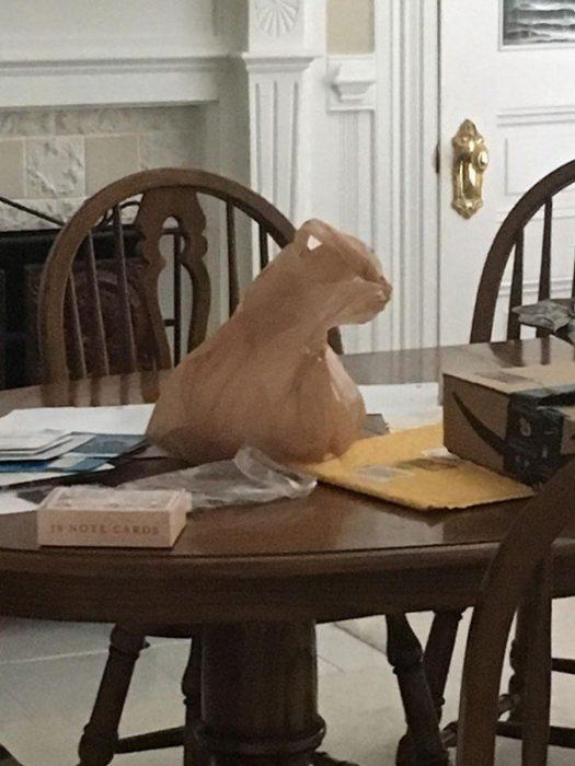 Objetos con mensaje gato