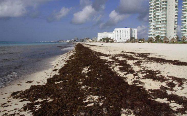 algas en las playas energeticas