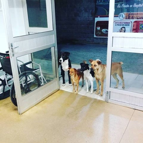 perros dueño hospital