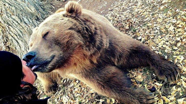 oso niño