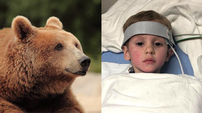 oso niño perdido
