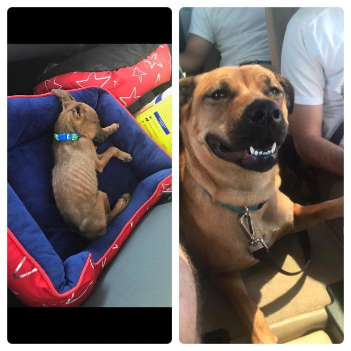 Antes y después de los animales maltratados.