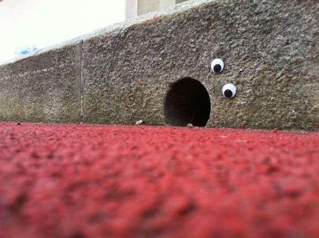 Ojos saltones en cosas ducto