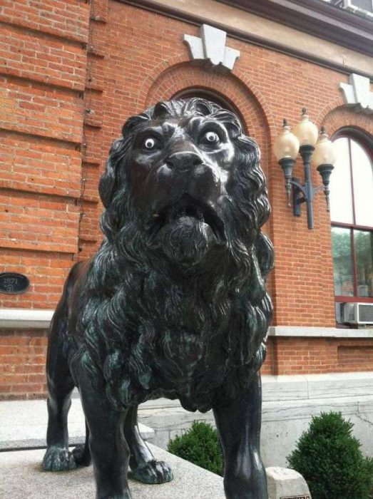 Ojos saltones en cosas león