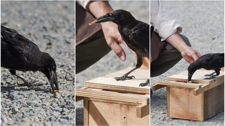 Limpieza de cuervos